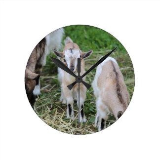 goat in the farm wallclocks