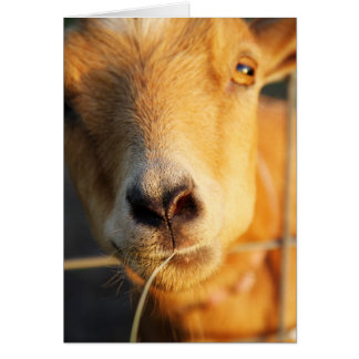 Goat Kisses Card