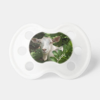 Goat looking at camera pacifier