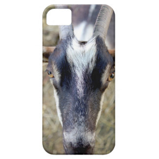 goat looking at you iPhone 5 case