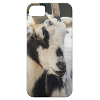 Goat portrait iPhone 5 case