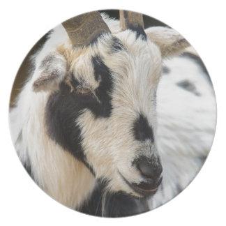 Goat portrait plate