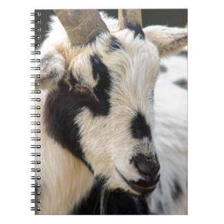 Goat portrait spiral notebook