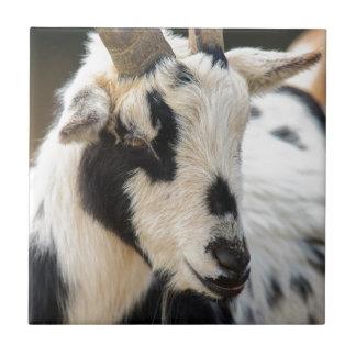 Goat portrait tile