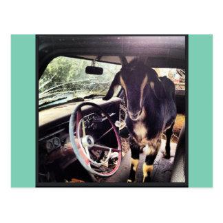 Goat Power Team Postcards