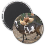 Goat taxi 2 inch round magnet