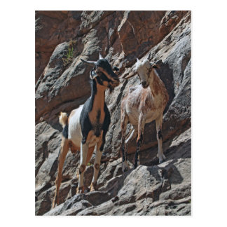 Goats in a rock cliff postcard