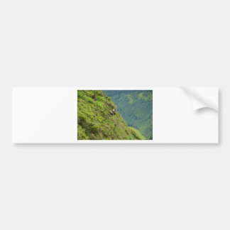 Goats on a very steep hillside bumper sticker