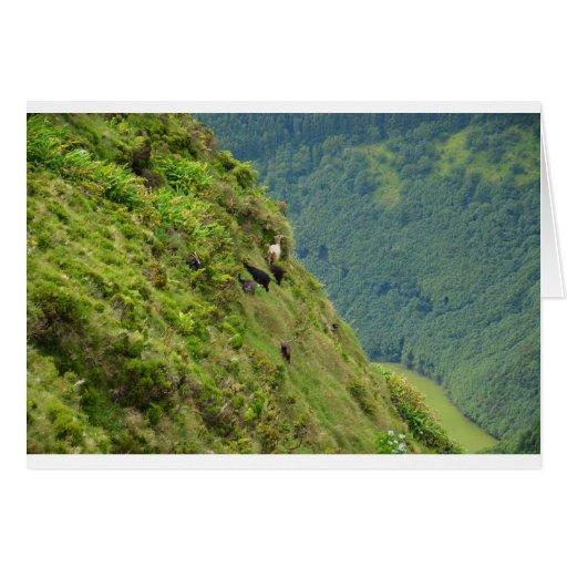 Goats on a very steep hillside card