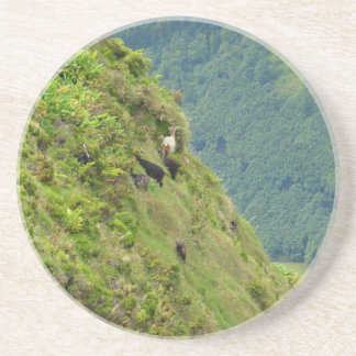 Goats on a very steep hillside drink coasters