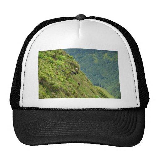 Goats on a very steep hillside mesh hat