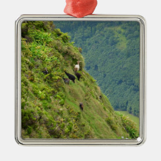 Goats on a very steep hillside Silver-Colored square ornament