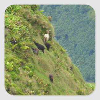 Goats on a very steep hillside square stickers