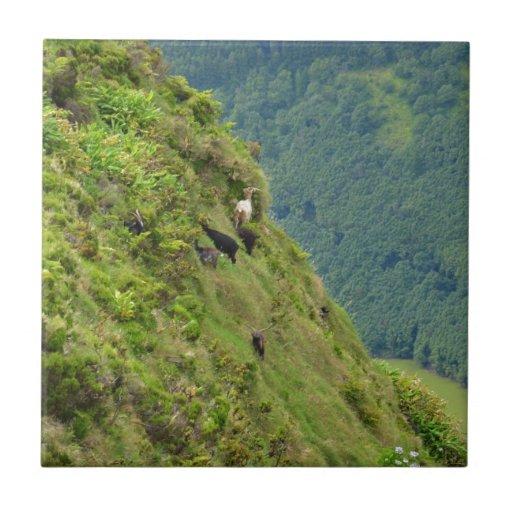 Goats on a very steep hillside ceramic tile
