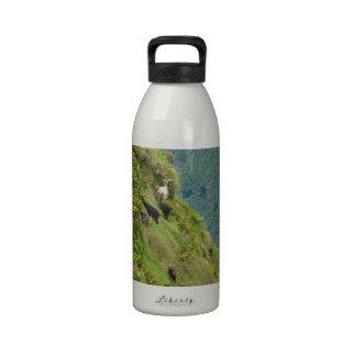 Goats on a very steep hillside drinking bottles