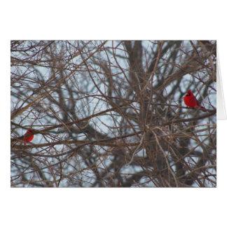God Created Beauty, Cardinals Card