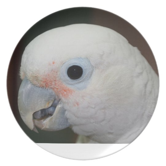 goffin cockatoo plate