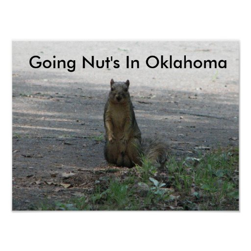 Going Nut's In Oklahoma Poster
