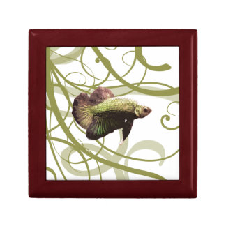 Gold Betta Siamese Fighting Fish Gift Box