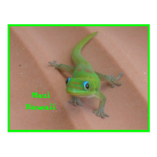 Gold Dust Day  Gecko Postcard