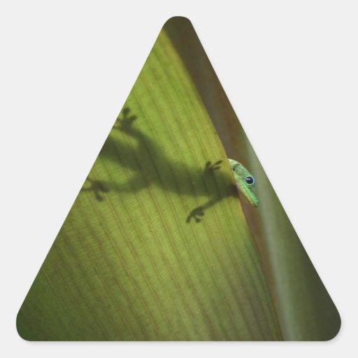 Gold Dust Day Gecko Triangle Sticker