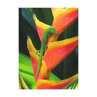 Gold Dust Gecko on Heliconia Canvas Print