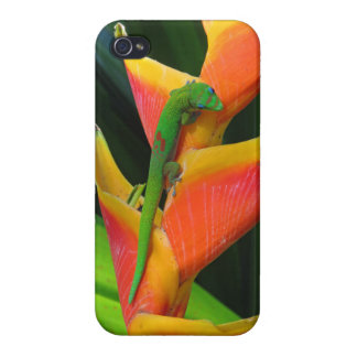 Gold Dust Gecko on Heliconia Cases For iPhone 4