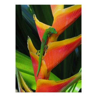 Gold Dust Gecko on Heliconia Poster