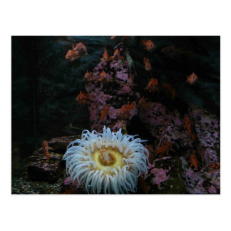 Gold Fish and Sea Anemone Postcard