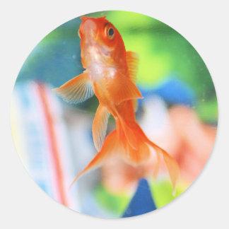 Gold Fish Round Sticker