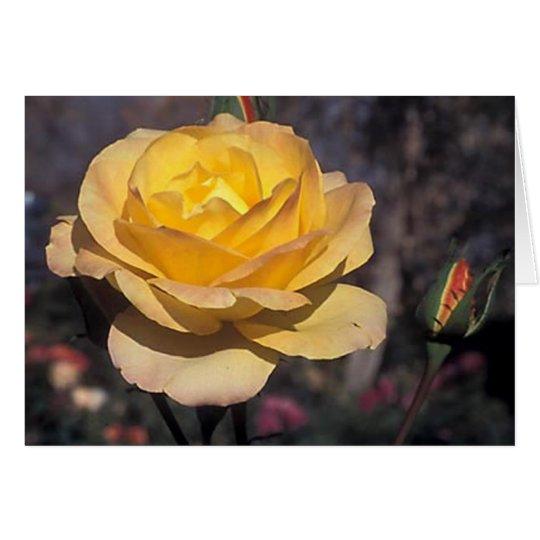 Gold  Medal Rose Card
