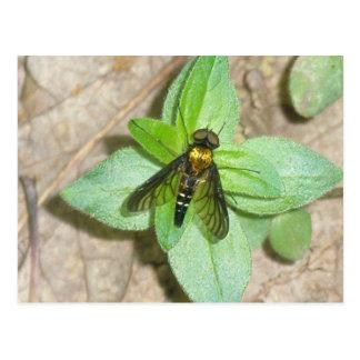 Gold Snipe Fly Postcard