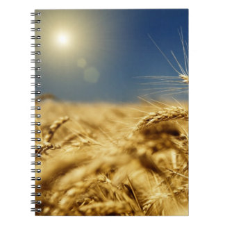 Gold wheat and blue sky with sun notebook