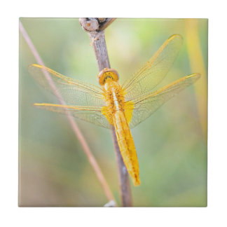 Golden and Yellow Dragonfly Tile