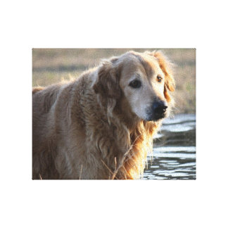 Golden Angel (Golden Retriever) Canvas Print