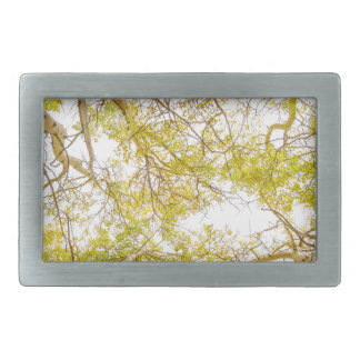 Golden Aspen Forest Canopy Belt Buckles