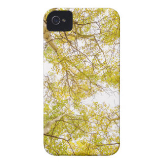 Golden Aspen Forest Canopy iPhone 4 Covers