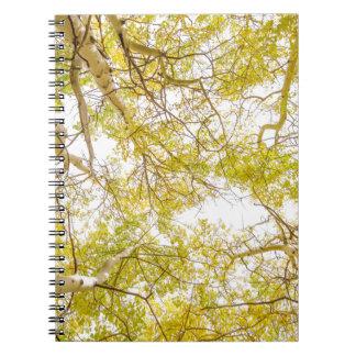 Golden Aspen Forest Canopy Note Book