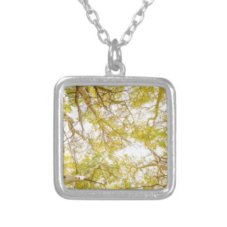 Golden Aspen Forest Canopy Silver Plated Necklace