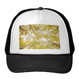 Golden Aspen Forest Canopy Trucker Hat