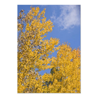 Golden Aspen in Autumn Card