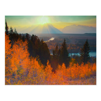 Golden Aspens Above Snake River At Sunset Postcard
