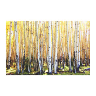 Golden Aspens Canvas Print