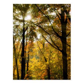 Golden Autumn Day Postcard
