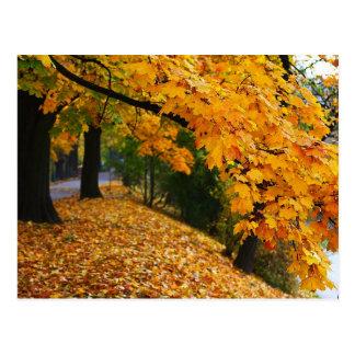 Golden Autumn Trees Postcard
