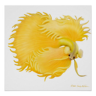 Golden Betta Fish Poster