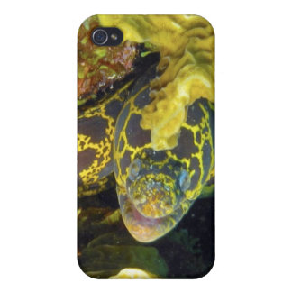 Golden Chain Moray iPhone 4 Cover