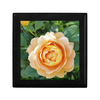 Golden colored rose gift box