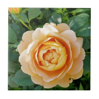 Golden colored rose tile