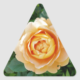 Golden colored rose triangle sticker